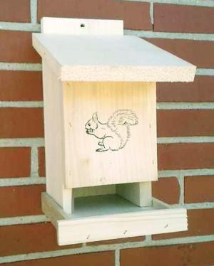 Eichhörnchen - Futterstation